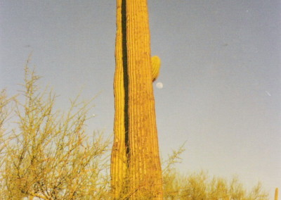 Moon over saguaro, photo by Johnna M. Gale
