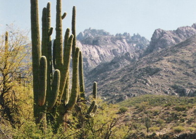 Tucson Saguaro, circa 1986, photo by Johnna M. Gale