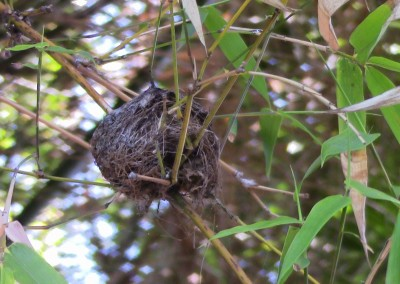 humming bird nest in SoCal, photo by Johnna M. Gale