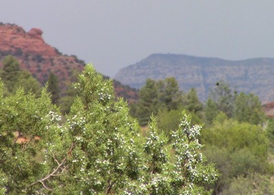 juniper, Sedona, AZ photo by Johnna M. Gale